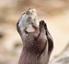 ご冥福をお祈りします