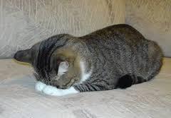 ネコ土下座